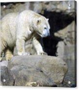 Habitat - Memphis Zoo Acrylic Print