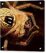 Hairy Spider Acrylic Print