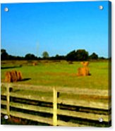 Hale Bales In Late Summer Acrylic Print