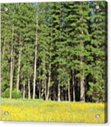 Half Dome Meadow Acrylic Print