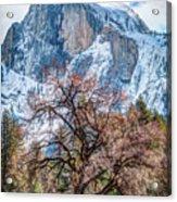Half Dome Meadow Tree Winter Acrylic Print