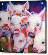 Half Dozen Piglets Acrylic Print