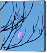 Half Moon Through The Trees Acrylic Print