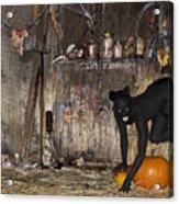 Halloween 2 Acrylic Print