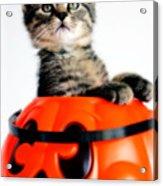 Halloween Kitten Acrylic Print