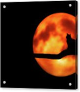 Halloween Night Acrylic Print