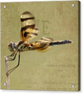 Halloween Pennant Dragonfly Acrylic Print