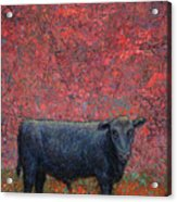 Hamburger Sky Acrylic Print
