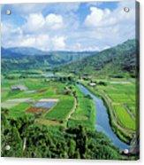 Hanalei Valley Taro Field Acrylic Print