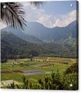 Hanalei Valley Taro Fields - Kauai Acrylic Print