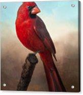 Handsome Cardinal Acrylic Print