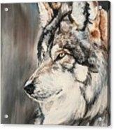Handsome Wolf Acrylic Print