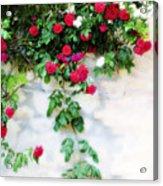 Hangin Roses Acrylic Print