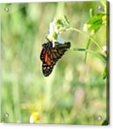 Hanging By A Thread Acrylic Print