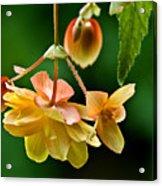 Hanging Flower Acrylic Print