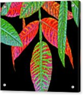 Hanging Green And Red Leafs... Acrylic Print
