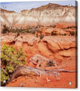 Hanging On The Cliff At Kodachrome Basin State Park Acrylic Print