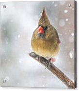 Hanging Out In The Snow Acrylic Print