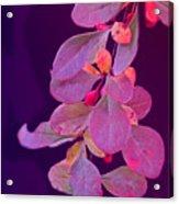 Hanging Purple Acrylic Print