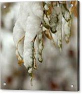 Hanging Snow Acrylic Print