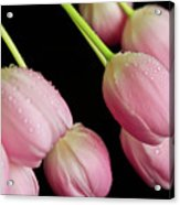 Hanging Tulips Acrylic Print by Tracy Hall