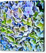 Hanson Hydrangea Acrylic Print