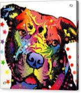 Happiness Pitbull Warrior Acrylic Print