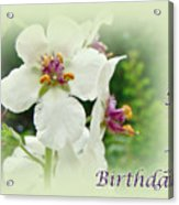 Happy Birthday - Floral - Moth Mullein Acrylic Print