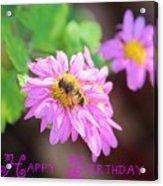 Happy Birthday Daisy Acrylic Print