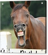 Happy Birthday Smiling Horse Acrylic Print