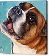 Happy Boxer Dog Acrylic Print