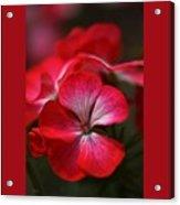 Happy Bright Geranium And Design Acrylic Print