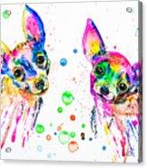 Happy Chihuahuas Acrylic Print