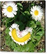 Happy Daisey Acrylic Print