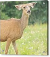 Happy Deer Acrylic Print