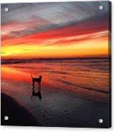 Happy Dog At Sunset Acrylic Print