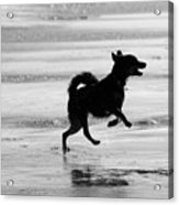 Happy Dog Black And White Acrylic Print