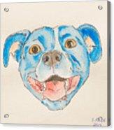 Happy Dog Blue Acrylic Print