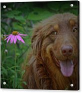 Happy Dog Days Acrylic Print