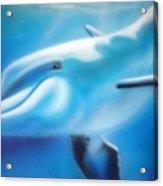 Happy Dolphin Acrylic Print