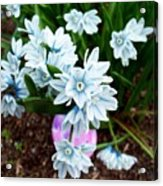 Happy Easter I Acrylic Print