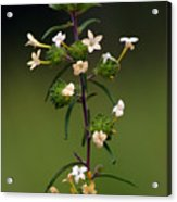 Happy Flowers Acrylic Print