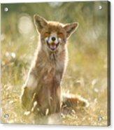 Happy Fox Is Happy Acrylic Print