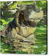 Happy Hippo Acrylic Print