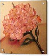 Happy Hydrangea  Acrylic Print