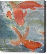 Happy Koi Acrylic Print