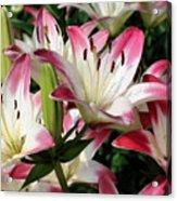 Happy Lilies Acrylic Print