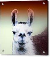 Happy Llama Acrylic Print