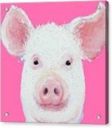 Happy Pig Portrait Acrylic Print