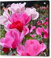 Happy Pinks Acrylic Print